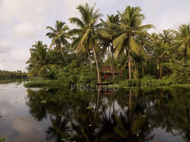 Palm Tree Reflection, Kerala, India — Stock Photo