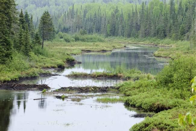 Река с плотины бобров — стоковое фото