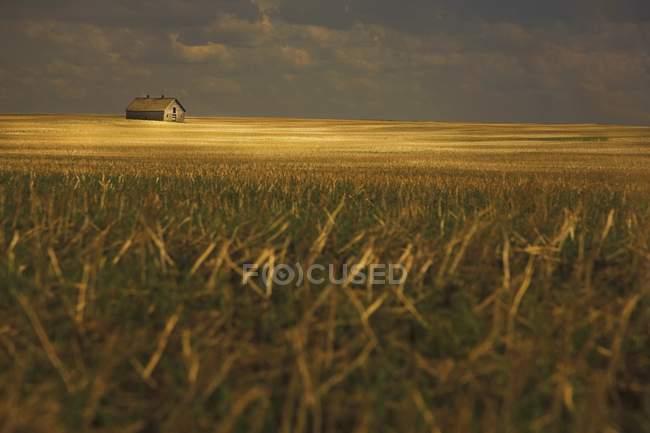 Velho celeiro no campo — Fotografia de Stock