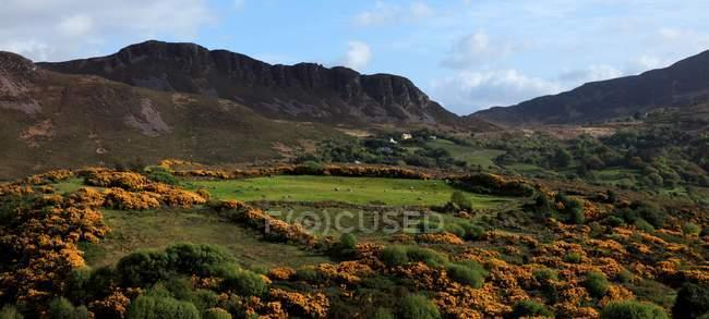 Landscape With Orange Wildflowers — Stock Photo