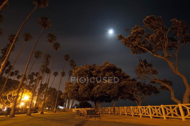 Moonlit scene in palisades park — Stock Photo