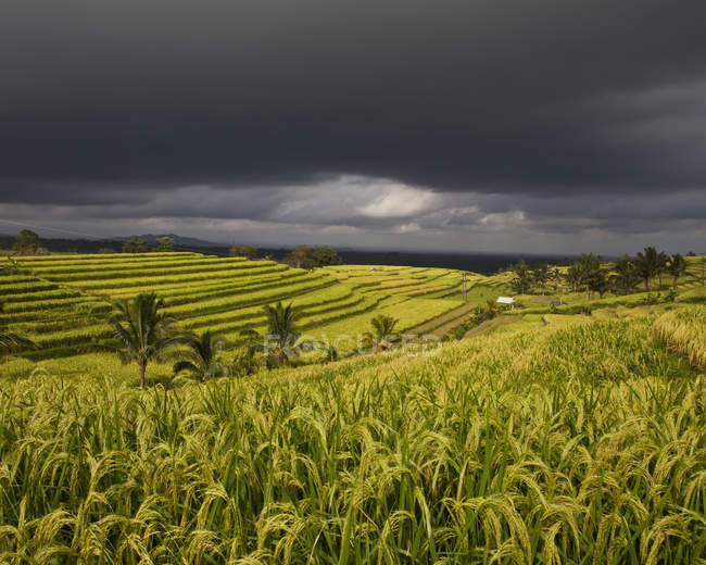Dark clouds passing over fields — Stock Photo