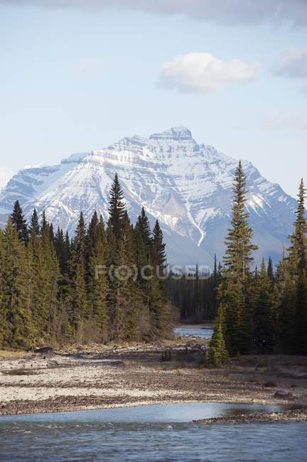 Athabasca river; Alberta canada — Stock Photo