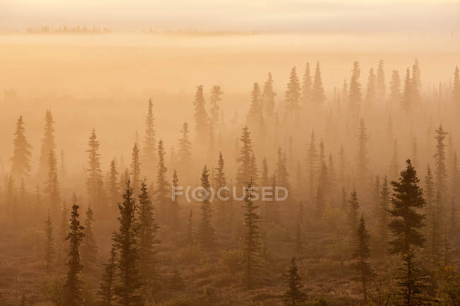 Sunrise Over A Foggy Forest — Stock Photo