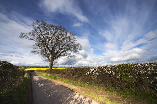 Haies poussant le long de la route rurale — Photo de stock