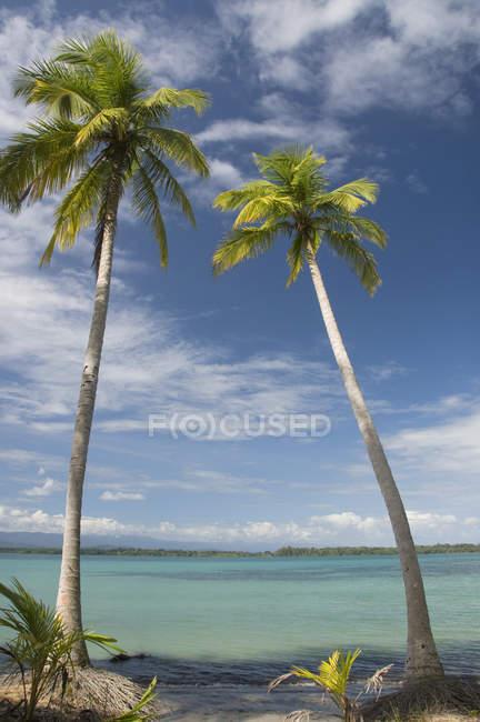 Пальмы вдоль воды — стоковое фото