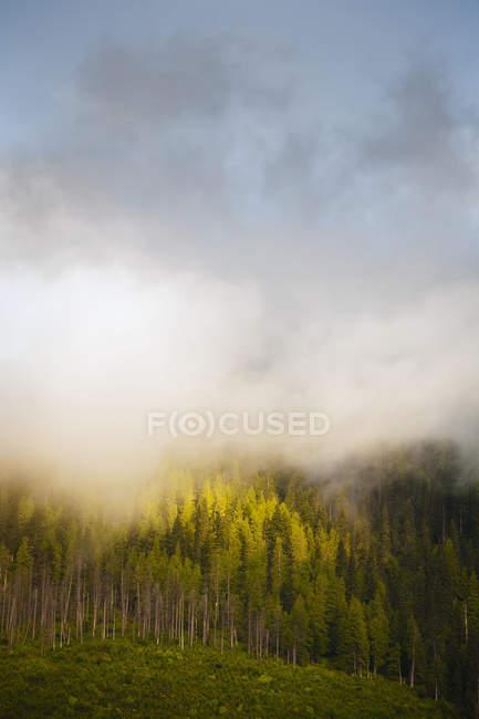 Morning sun burning off mist — Stock Photo