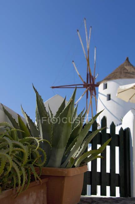 Кактус рослин у горщики і біла споруда — стокове фото