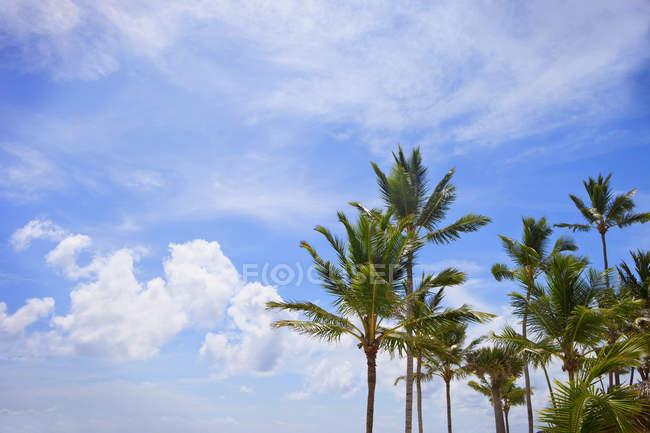 Palmen gegen Himmel — Stockfoto