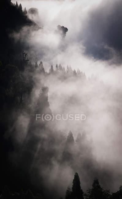 Bäume am Hang in Wolke bedeckt — Stockfoto
