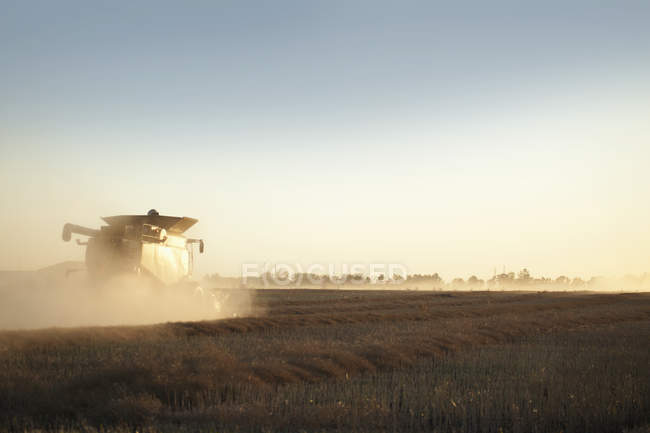 Combine Harvesting Grain — Stock Photo