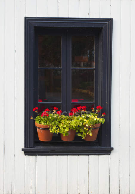 Flower pots on ledge — Stock Photo