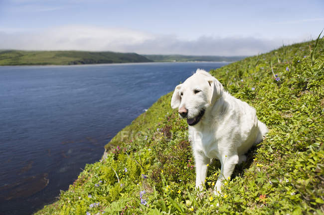 Cane che si siede sull'erba — Foto stock