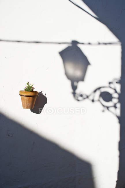 Planta em vaso montada no wal — Fotografia de Stock