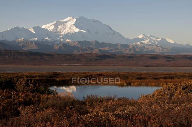 Mt. Mckinley mit Reflexion In Tundra Teich — Stockfoto