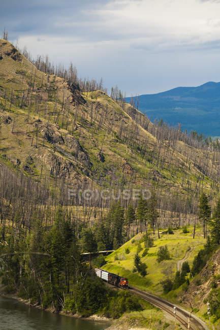 Поїзд, що йде шлях через ліс — стокове фото