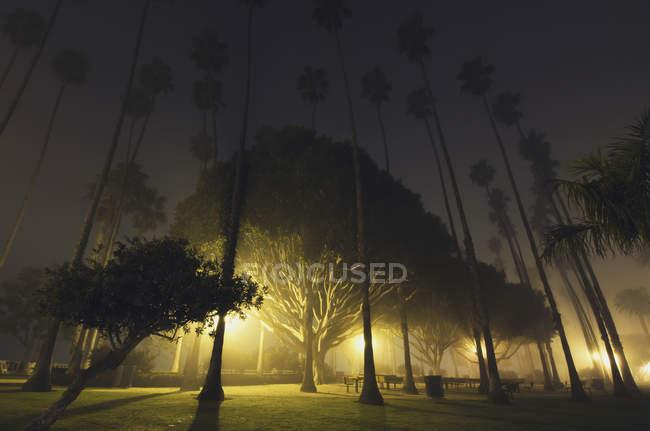 Una notte nebbiosa nel parco di palisades; Santa monica california Stati Uniti d'america — Foto stock