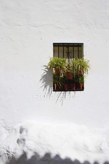 Plantas en macetas en la ventana - foto de stock
