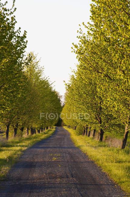Estrada arborizada no final da noite — Fotografia de Stock