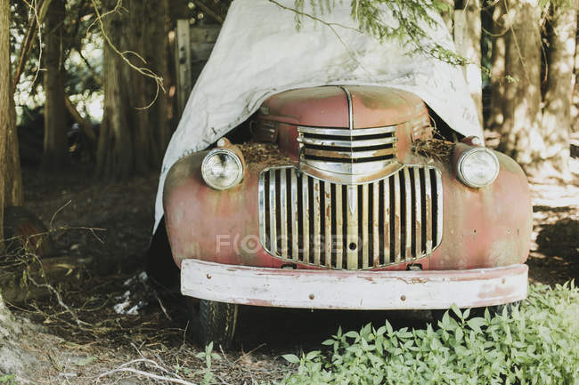 Vintage Car Under Trees — Stock Photo