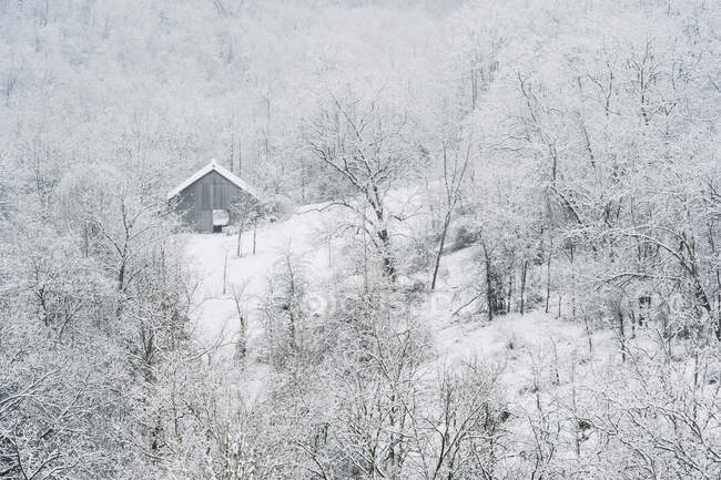 Fienile, circondata da alberi e neve in inverno — Foto stock