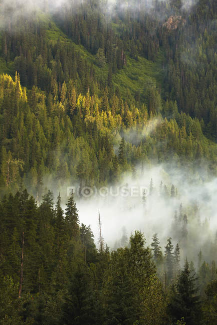 Morning mist on forested mountainside — Stock Photo