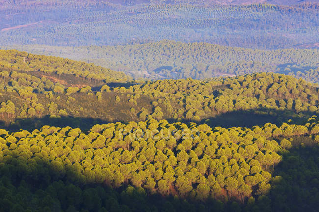 Rolling hills and pine forests — Stock Photo