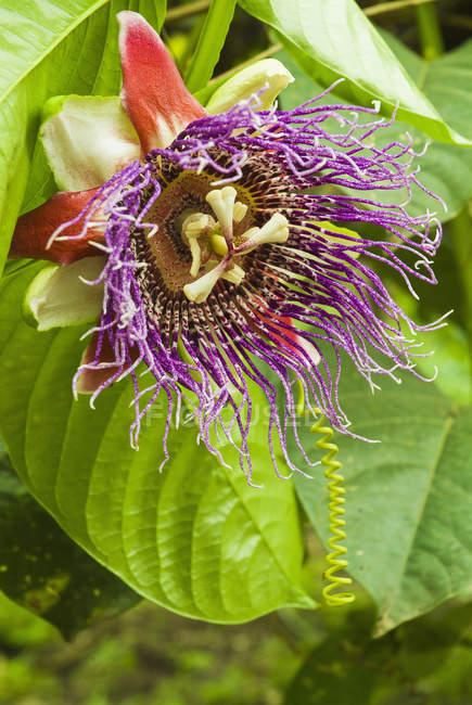 Sorprendente e intricato del fiore — Foto stock