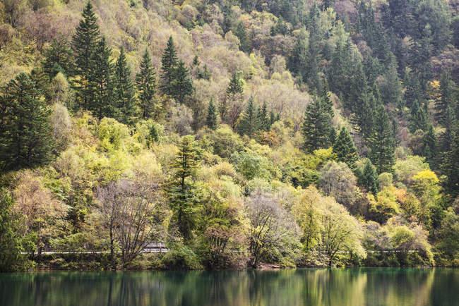 Vielfalt der Bäume im Herbst Farben — Stockfoto