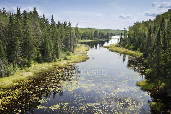 Pastiglie Lily in fiume con cielo blu — Foto stock