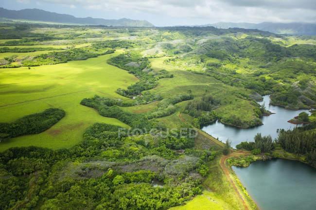 Пейзаж пышных деревьев и полей — стоковое фото