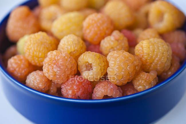 Freshly Picked lamponi dorati — Foto stock