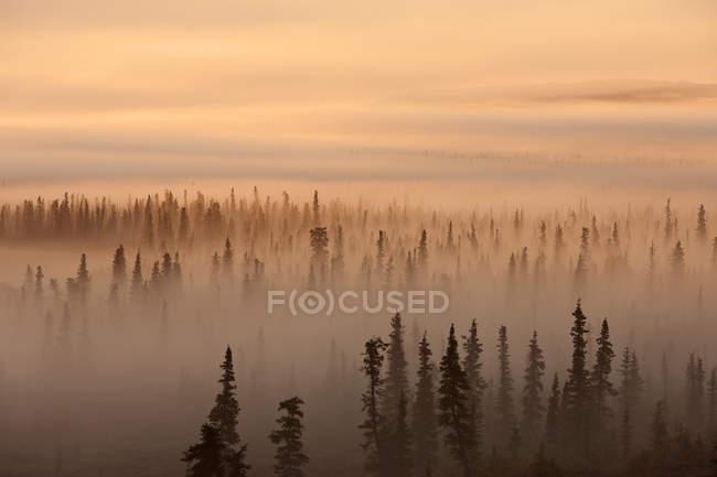 Alba sopra la foresta nebbiosa — Foto stock