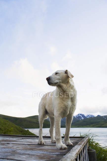 Cane sul bacino di legno — Foto stock