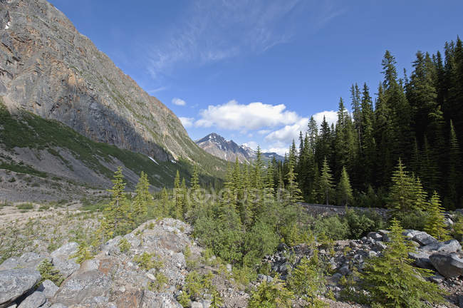 Mount Edith Cavell — Stockfoto