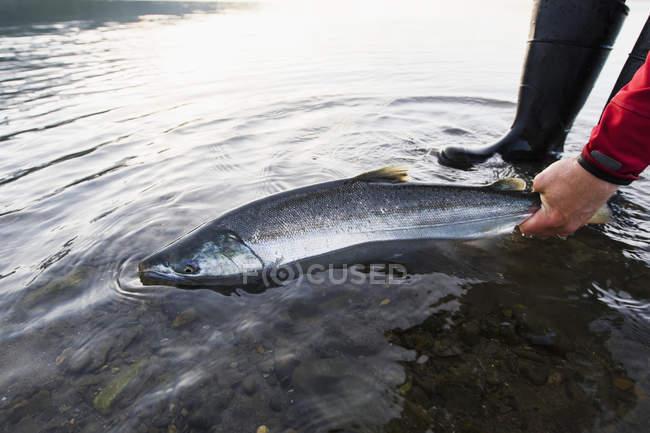 La pêche de Salmo argent — Photo de stock