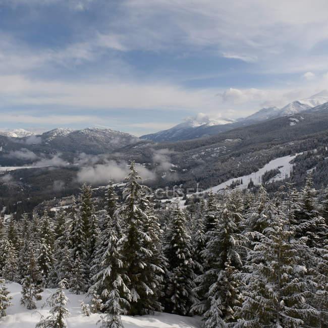 Заснеженные деревья в горах — стоковое фото