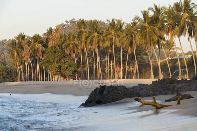 Palmeras Rocas y madera a la deriva en la playa - foto de stock