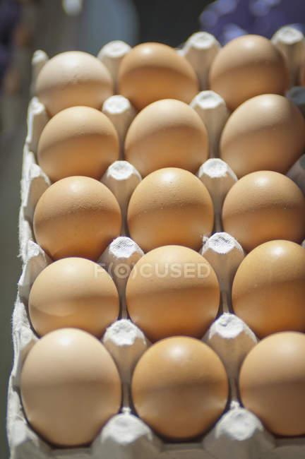 Ovos castanhos na caixa — Fotografia de Stock