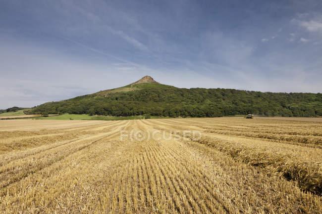 Campo de trigo com pico no topo — Fotografia de Stock