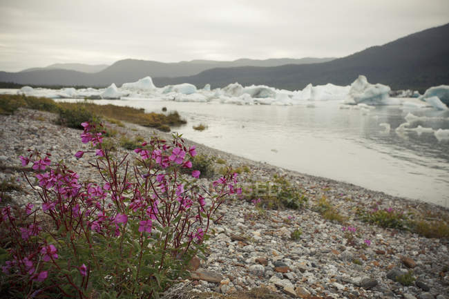 Icebergs In Bay With plants — Stock Photo