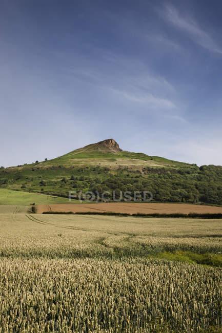 Фермерская ферма на фоне холма — стоковое фото