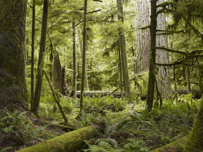 Cathedral Grove, Canada — Stock Photo
