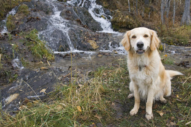 Mixed Breed Dog — Stock Photo