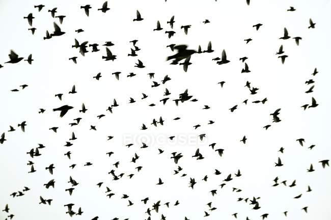 Vuelo de aves de pluma - foto de stock