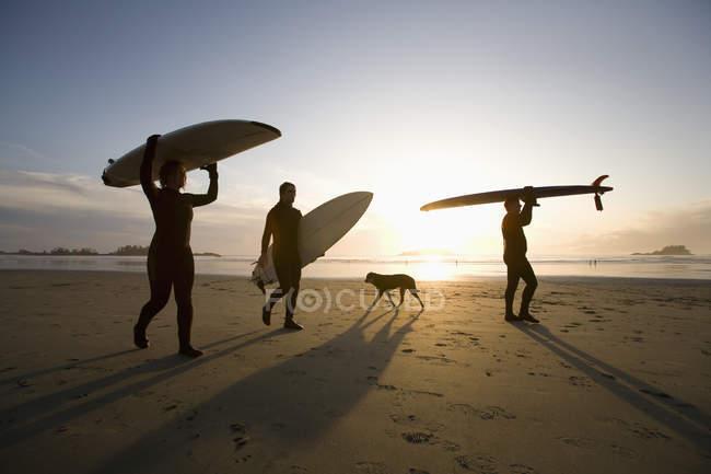 Силует три серферів і собака; Chesterman пляж, Tofino, острова Ванкувер, Британська Колумбія, Канада — стокове фото