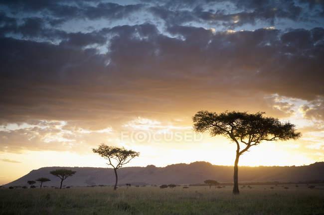 Árboles y animales al aire libre - foto de stock