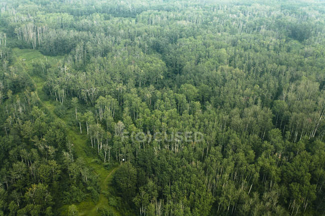 Poplar Forest And Trails At Cooking Lake; Alberta, Canada — Stock Photo