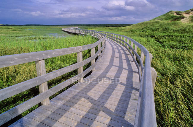 Wood Bridge Protects Wetlands — Stock Photo