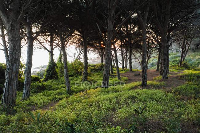 Arbres le long de la côte au coucher du soleil — Photo de stock